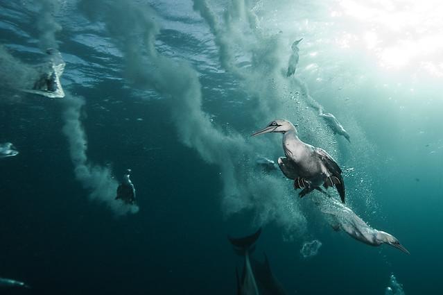 the sardine run #36