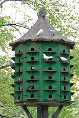 birdhouse, bird feeder,