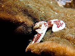 starfish(0.0), animal(1.0), coral(1.0), echinoderm(1.0), organism(1.0), marine biology(1.0), invertebrate(1.0), macro photography(1.0), fauna(1.0), close-up(1.0), underwater(1.0), reef(1.0),