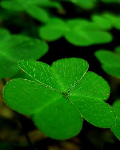 macro green nature sorrel