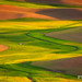 Palouse Curves by Chip Phillips