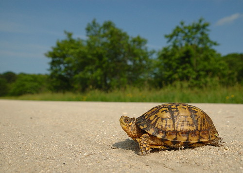 Why Did the Turtle Cross the Road? by Mark Schwall