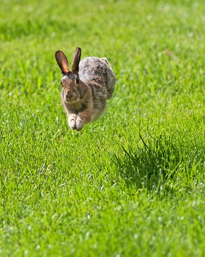Urban Bunny