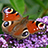 the Butterflies, Moths and Insects UK group icon