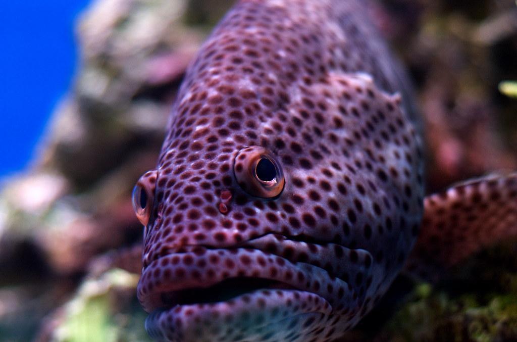Fish #9