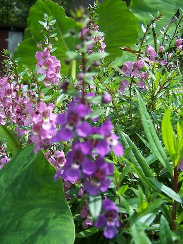 more pretty purple