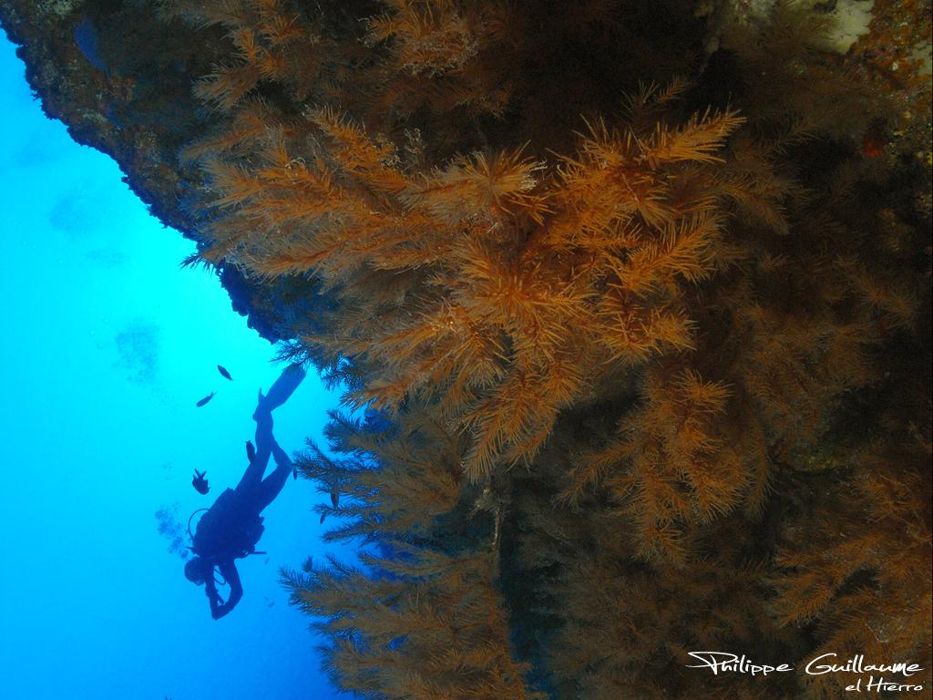Isla Faial