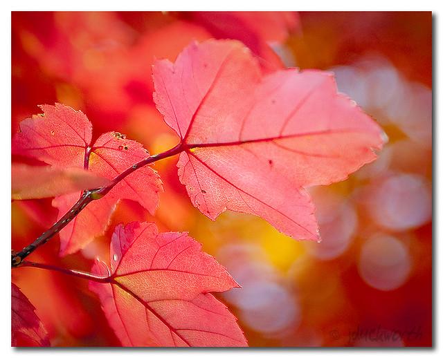 Fall Fire I
