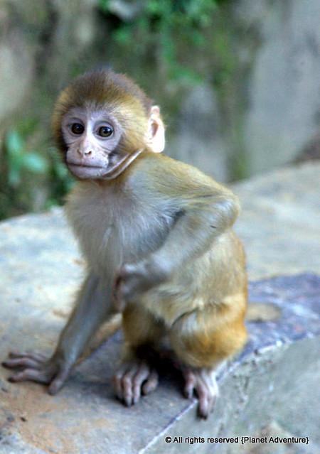 Baby Monkey - Monkey Temple - Kathmandu - Nepal