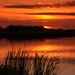 2013  Horicon Marsh Sunset 91 by DrLensCap