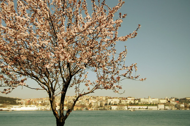 Spring in Istambul