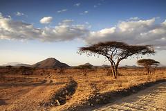 Samburu Game Reserve, Kenya, East Africa