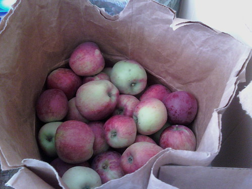 Apples of unknown cultivar