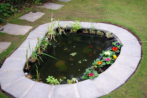 Garden Pond with fish