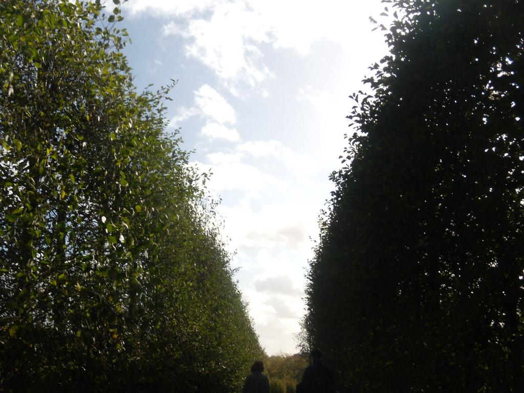 Through the orchard Sevenoaks Circular
