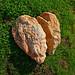 Coeur de pierre brisé by lons lens