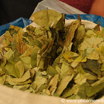 Coca Leaves for Sale - Huancavelica, Peru