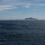 Anacapa Island with a Dolphin Pod in the Foreground