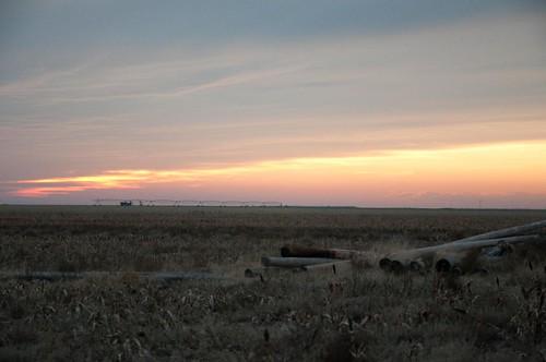 pheasant farming hunting kansas copeland sublette nikond90