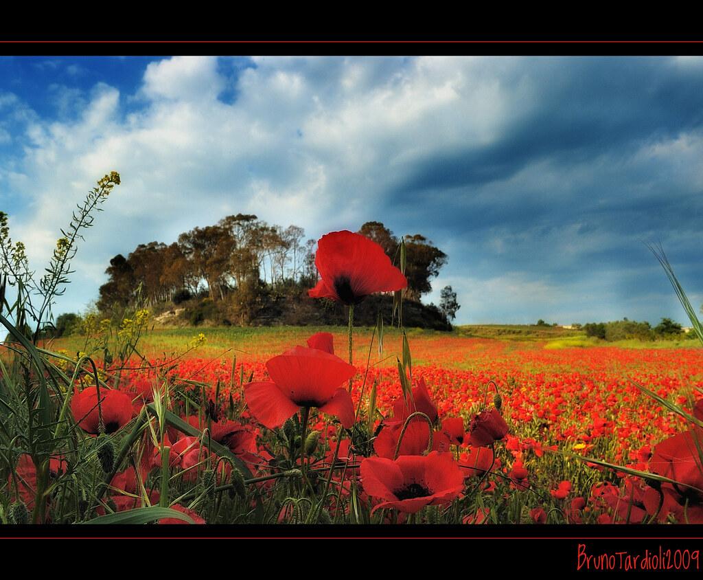 bruno tardioli s most interesting flickr photos picssr