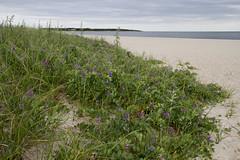 20110603 - Kalmus Beach Landscapes