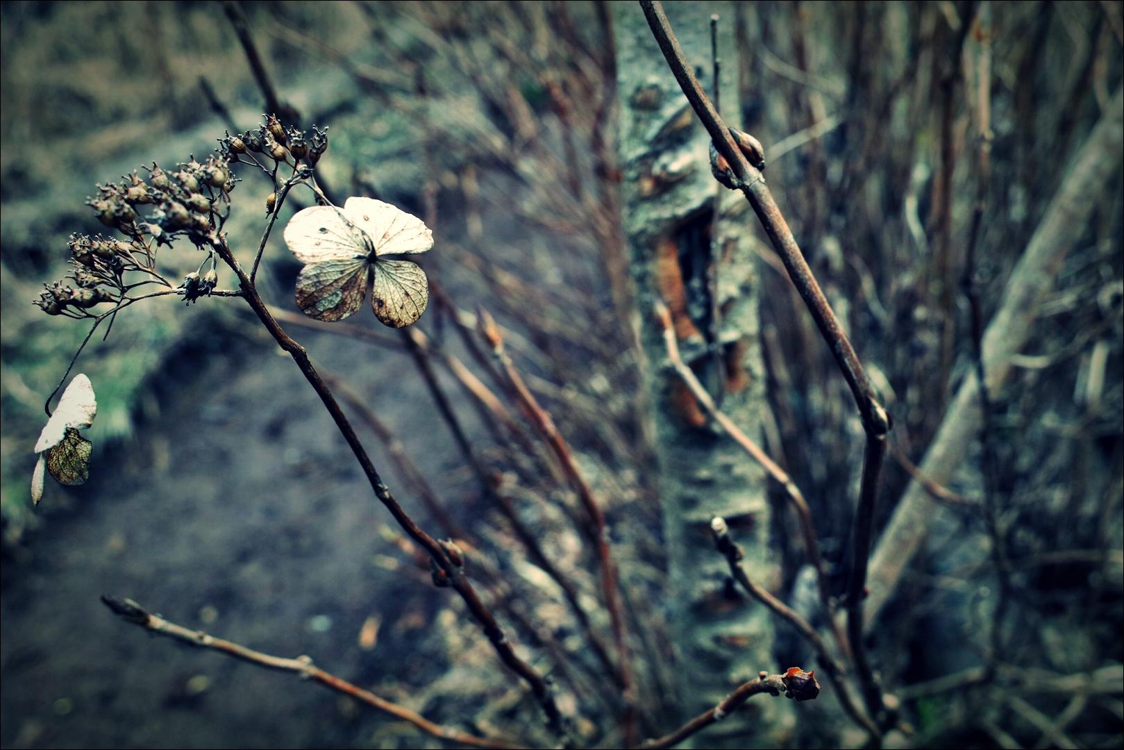 식물-'제주도 거문오름'