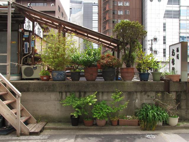Tokyo Plant Pots 294 東京植木鉢