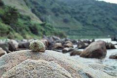岩の上の貝殻