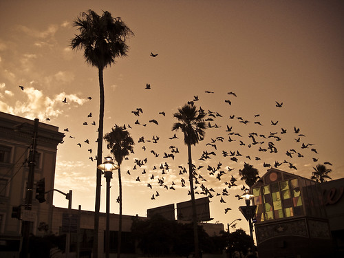 Birds At Evening