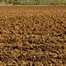 Small photo of Soil