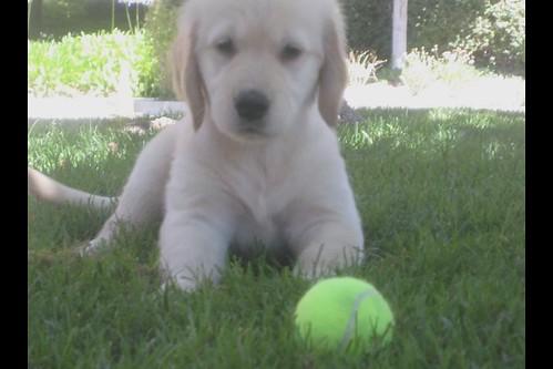 My First Puppy Crush