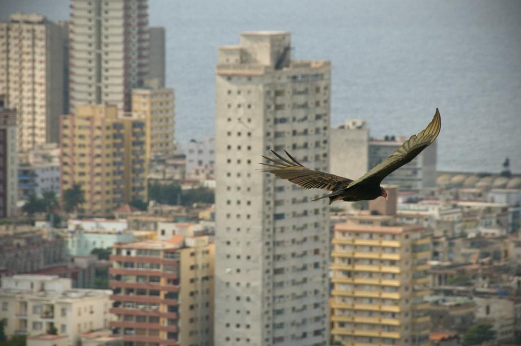 Sobrevolando La Habana