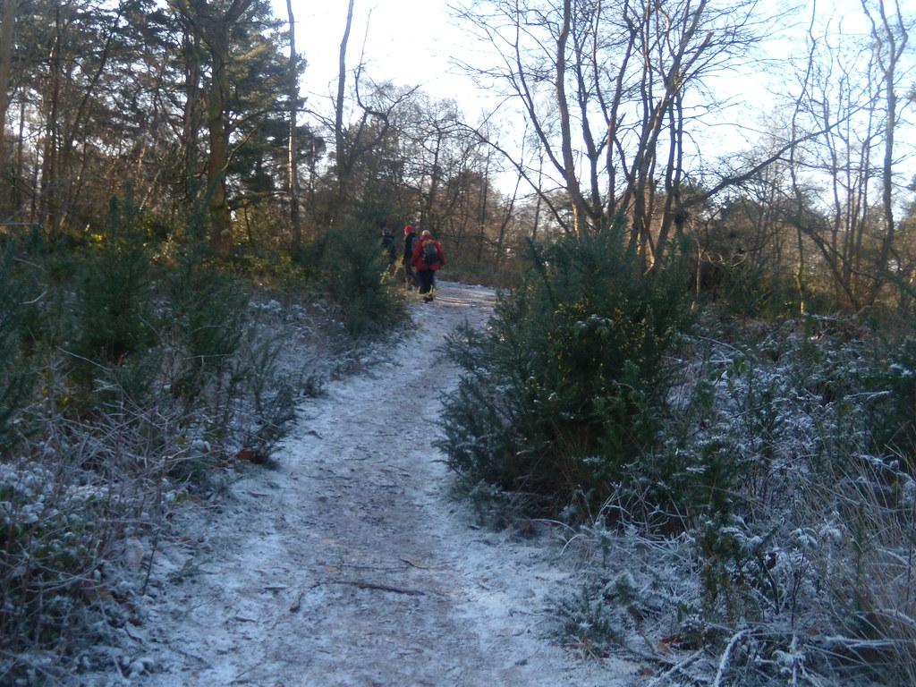 Frosty path DSCN8268 Haslemere Round Walk