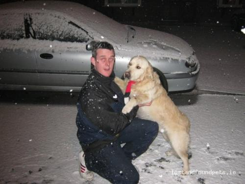 Thu, Jun 9th, 2011 Lost Male Dog - Castlemahon, Newcastle West, Limerick