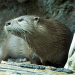 Woodland Park Zoo Seattle 091