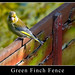 Greenfinch Fence