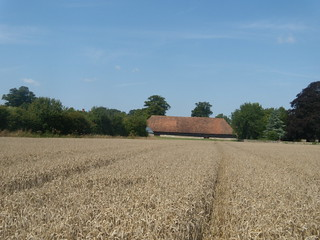 Big barn, Lenham