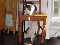 Louie & Stymie