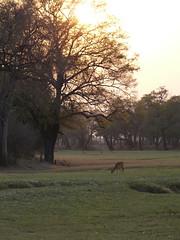 Zambia03SouthLuanga173