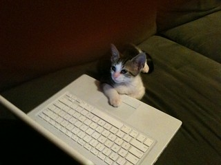 Kitteh does more data entry