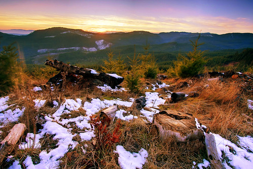 sunset snow tree forest canon dead eos warm forestry brush stump gps 1022mm 1022 geotagging 40d