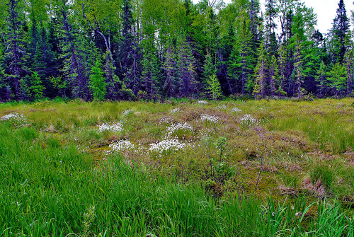 Spur Lake State Natural Area (SNA #537, Oneida Co., WI)