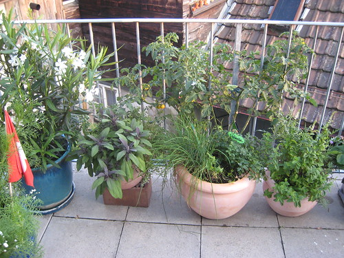 Balcony Plants