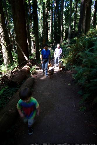 walking in the humboldt redwoods    MG 1059