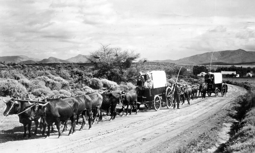 Type of Ox-wagon used During The Great Trek