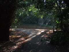 Oxlea woods sunbeams
