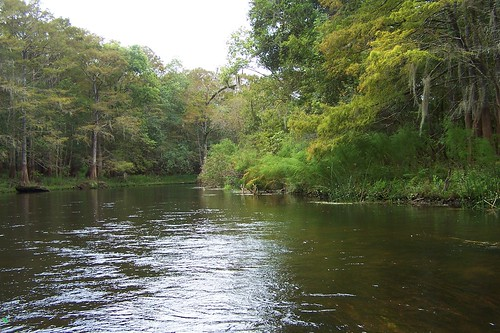 usa water river wasser unitedstates florida withlacoochee pascocounty stateforest withlacoocheeriver fisherbray