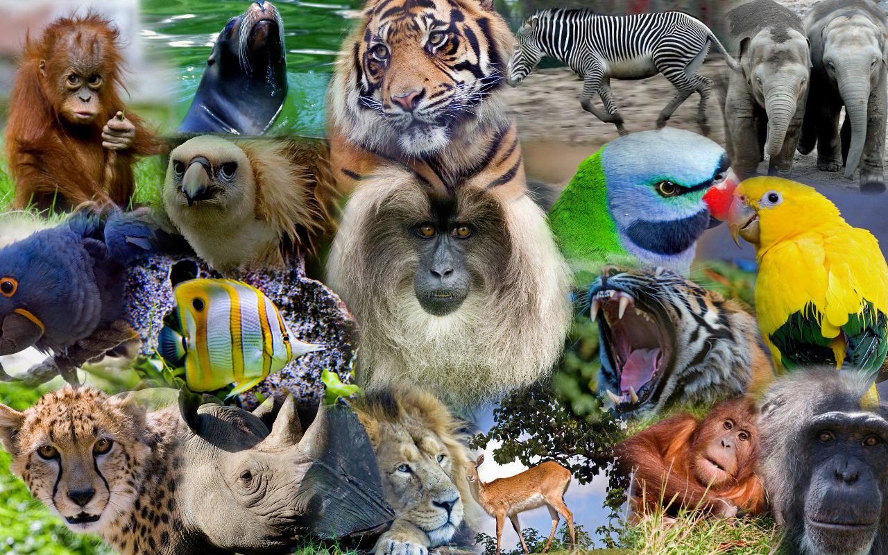 Group of wild animals together - photo#12