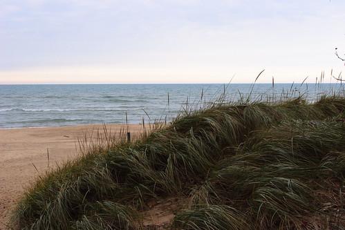 Grass Dune