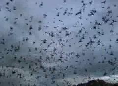 Bracken_Cave_Bats